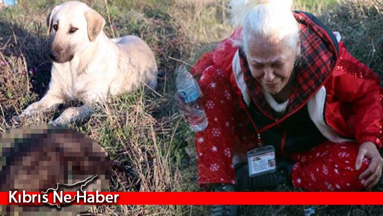 Sekiz yavru köpek yakılarak öldürüldü